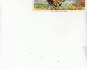 1960s artist ken haag postcard south dakota state bird chinese ringneck pheasant unused