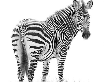 Independence- Zebra limited edition wildlife giclee print