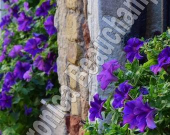 Purple in Italy Photo Print