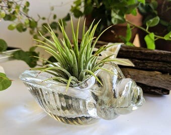 A set! Airplant + Airplant holder, Air plants, Airplant holder, Home decor, Glass Airplant holder, Houseplants