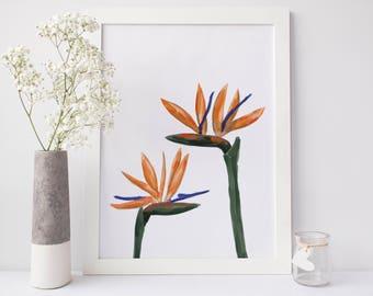Bird of Paradise, Strelitzia Art, Tropical Plant Art, Printable Instant Download, Tropical Botanicals, Tropical Decor Art Print Original Art