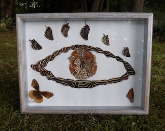The Third Eye of a Butterfly  // Real Framed Butterflies