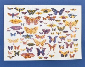Scottish Moth Riso Print - risograph, moth, butterfly