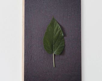 """Mulberry"" (series 2017 Leaves) on plywood panel"
