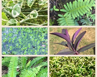 CUSTOM VIVARIUM ESSENTIALS Live Plants Pack Moss, Ferns, Ivy, Driftwood