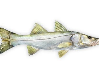 Snook, Snook Fishing Decal, Snook Fishing Sticker