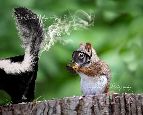 Funny Squirrel Print Whimsical Animal Art Skunk Spray Funny