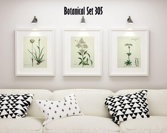 Set of 3 Botanical Prints, White Floral Prints, Cottage Chic Decor, Botanical Art, Country French Wall Art, Housewarming Gift, Farmhouse Art