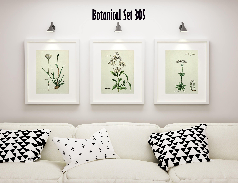 Set Of 3 Botanical Prints White Floral Prints Cottage