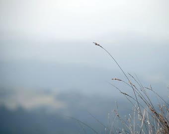 Meadow Grass - Stock Photography, Digital Download, Photograph, Nature