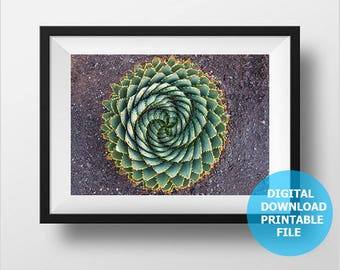 Digital Download, Spiral Aloe Polyphylla Round, Lesotho, South Africa, Botanical Aloe Photography, Aloe Prints Digital, Printable Aloe Decor