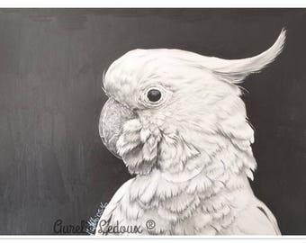 pet portrait in pencil COCKATOO