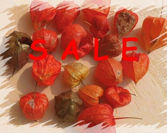 SALE now 4.08 instead 4.80 - Lantern fruit Physalis special natural material for the DIY Bastelmaterial