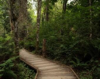 Forest Boardwalk Digital Backdrop