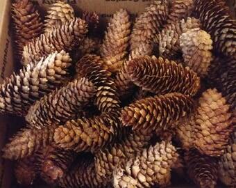 Pine cones-douglas fir cones- medium sized box full-flat rate shipping cost (13.75)