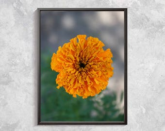 Floral Macro Photography Yellow Flower Art Digital Photography Botanical digital Garden Flower Decor Floral Art Yellow Flower Download Print