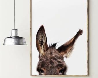 Donkey photography. Animals poster. Donkey's ears. Instant download
