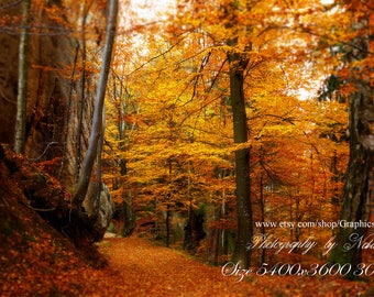 Autumn forest digital backdrop Fall background size 5400x3600 300ppi ( image 1709151)