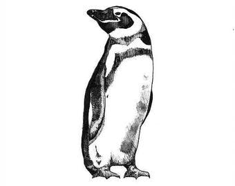 Penguin print - mounted