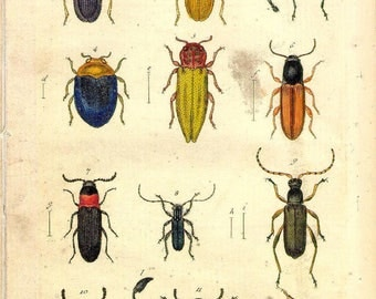 Set of 2 Antique Natural History Reproduction Prints of Insects 18th Century Pictures No.2 A4