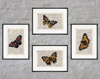 Prints - set of 4 - BUTTERFLIES No.. 1 - Antiquarian Book page