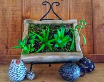 Handmade Vertical Garden l Wall Planters | Living Wall l Succulent Garden | Walled Garden | Green Wall l Vertical Garden | Valentine's Day