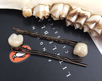 Molar human tooth hair clip pair