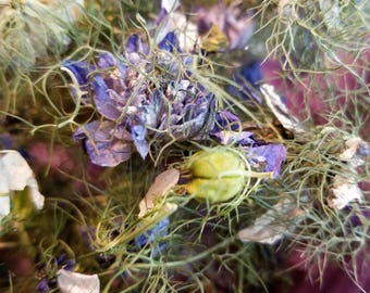 Dried Nigella Flowers and Seed Pods, Dried Love in a Mist, Dried Flowers, Dried Flower Potpourri, Rustic flowers, Purple Green Pods