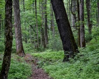 Cades Cove Treeline Photography