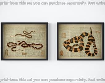 Print set, Set of 2 prints, Snake print set, Dictionary art, Snake printable, Vintage prints, 8x10 artwork, Reptile art, JPG, 11x14 wall art