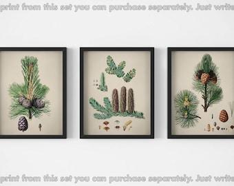 Set of 3 prints, Tree art set, Printable images, Tree illustration, Cedar trees, Tree download, Digital images, Graphics vintage, Tree print