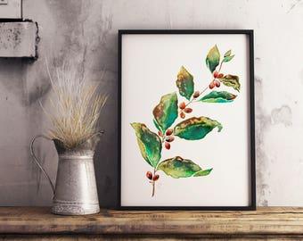 Coffee Plant - Botanical - Cafe Arabica