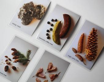 Charlotte Mason, Nature Study Cards for Montessori, Classroom, Homeschool, Reggio, Waldorf, Preschool, Science, Art