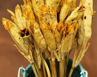 Dried Iris Pods | Dried Iris Flower | Dried Flowers | Dried Decorations
