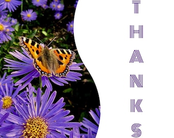 """Individual 140mm Square Blank Thank You Card  """"Thanks"""" Add own message By Crannycards"""