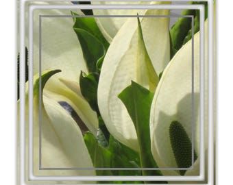 """Pack of 4  """"Lillies"""" Flower Design Square Blank Greetings Cards"""