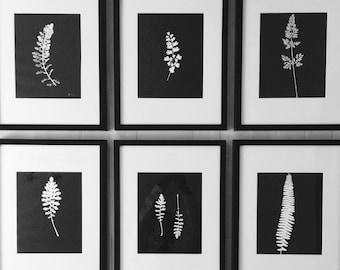 Black Botanicals, Set of 6, Hand pressed botanical, modern botanicals, pressed botanicals, real botanicals, Wall art set, Gifts for her