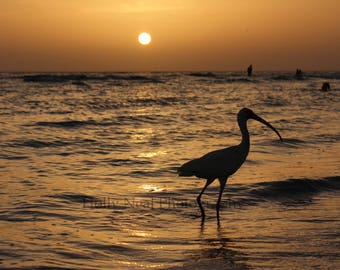Silhouette of Ibis at Sunset