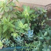 SucculentCuttings4U