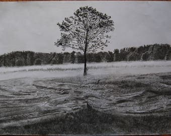 Original A3 Charcoal Drawing Listed by Self-Representing Artist, Lone Tree
