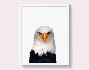 Bald Eagle Print, American Eagle Wall Art Poster, Printable Digital Download, Hawke, Boys Room Decor, Bird Animal Photography, #571
