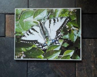 Digital Swallowtail Butterfly Photo