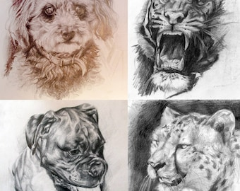 Custom hand drawn pets and animal portraits, drawn with pencil from photo