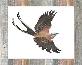 Scissor-tailed Flycatcher Bird Print