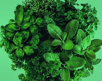 Herbal Healing Consultation