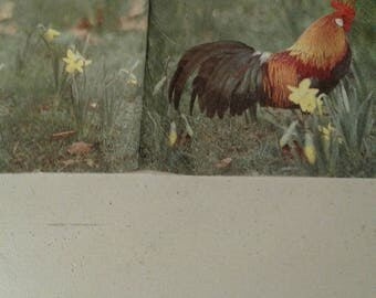"Pretty NAPKIN pattern ""Rooster"""