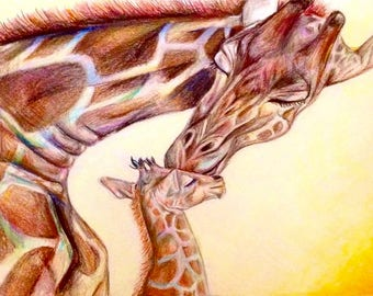 Mama and Baby Giraffe (5 X 7 || Print)