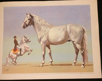 Very nice white horse lithograph by Sam Savitt circa 1950 depicts colonial era Rider!