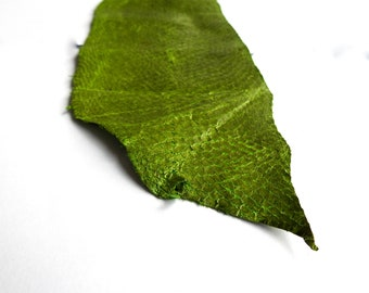 Fish Leather green leather hide green fish leather cuir de poisson exotic leather hides fish skins cuero de pescado mermaid scales leathers