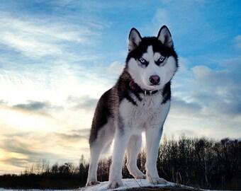 PLACEMAT semi-rigid, ORIGINAL, AESTHETIC WASHABLE and durable - Huskies - snow - classic.